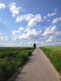 Country road. And blue sky in summer Stock Photography
