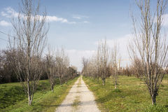 Country road in Brianza (Lombardy) Stock Photography