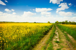 Country road with canola field Stock Image