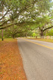 Country Road with Canopy Oak Trees Stock Photos