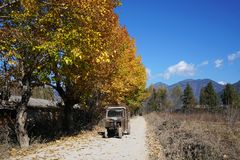 Road with Colorful Trees in Winter. A country road with colorful leaves on the big trees under the sunshine in early Winter. A tractor is driveing on the road Stock Photos