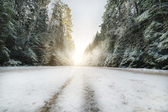 Country road in coniferous forest covered with snow. Sunlight Stock Image