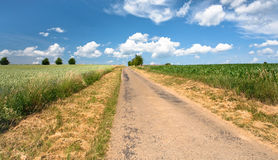 Country road among corn and wheat fields Royalty Free Stock Photo