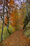 Country road covered with leaves in autumn forest Stock Photography