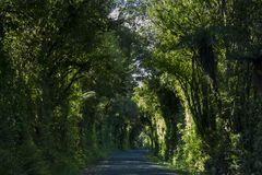 Country Road Covered by Lush Trees. Tree tunnel road Royalty Free Stock Photo