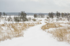 Country road covered with snow Stock Photography