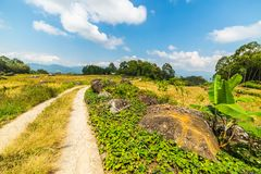 Country road crossing rice paddies Stock Photo