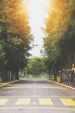 Country road with crosswalk line through pine tree valley Stock Image