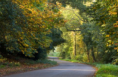 Country road curving through autumnal trees. A winding country road cuts through colourful autumnal trees in Warwickshire, England Stock Photo