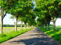 Country road in Denmark Stock Images