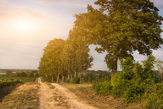 Country road. Dirt road on sunny countryside Royalty Free Stock Photo