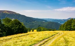 Country road down the alpine meadow. Beautiful summer landscape in mountains Stock Image