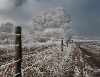 Country road in dutch winter Royalty Free Stock Image