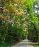 Country road in early fall. Small country road through the woods with leaves just turning in fall Royalty Free Stock Images