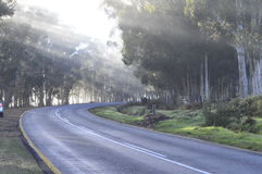 Country road. Early morning on a country road in the Western cape South Africa. traveling from Hermanus to stellenbosh Royalty Free Stock Image