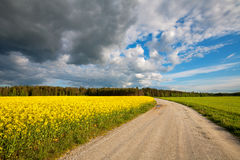 Country road. Estonia Royalty Free Stock Image