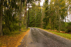 Country road in fall. Country road with wet asphalt in the fall Royalty Free Stock Image