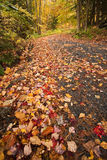 Country Road in Fall. Country road with different colored leaves scattered in early fall Stock Photo