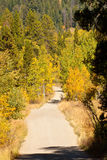 Country Road in Fall. A dirt road leads into autumn forest in the Grand Tetons stock photo