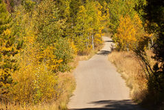 Country Road in Fall. A dirt road leads into autumn forest in the Grand Tetons royalty free stock photography