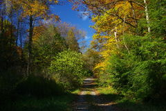 Country road in the Fall Royalty Free Stock Images
