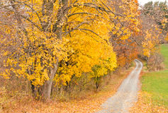 Country road in Fall color Royalty Free Stock Photos