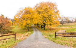 Country road in Fall color. Tree lined rural country road in Fall color, upstate New York Stock Photos