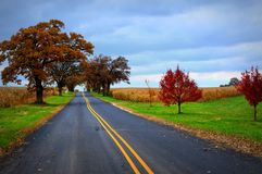 Country Road Fall. A freshly paved country road leading through two corn fields with lots of fall colors.  Oak Trees, red, orange and yellow colors.  This was Stock Images