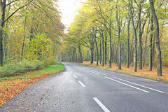 Country road in fall in Netherlands Stock Photos