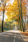 Country road in fall the Netherlands Royalty Free Stock Photography