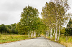 Country Road on a Fall Overcast Day royalty free stock photo
