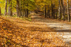 Country road in fall, Vermont. Stock Images