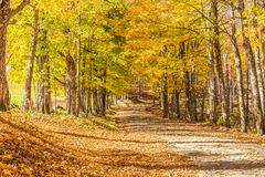Country road in fall, Vermont. Stock Photography