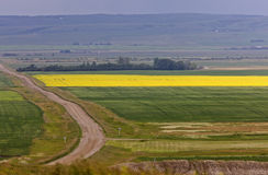 Country road and farmlands. Canada Royalty Free Stock Photo