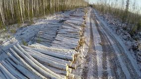 Country road and felled trees in winter time. Winter landscape. Road. Firewood. Aerial view. 4K stock video footage