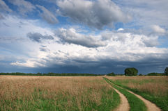 Country road in the field royalty free stock images