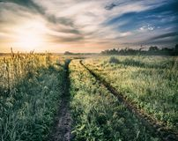 Country road in field with fog and green grass at sunset Royalty Free Stock Photo
