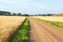 Country road at the field Royalty Free Stock Photography