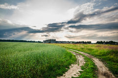 Country road through a field of green grass Royalty Free Stock Images