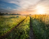 Country road in field with green grass at sunset Royalty Free Stock Images