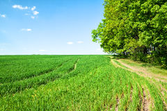 Country road in a field Stock Photography