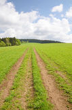 Country road in the field Royalty Free Stock Photos