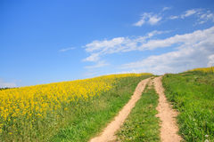 Country road through a field of rapeseed Stock Photo