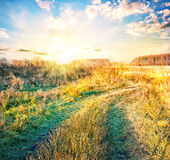 Country road in field with yellowing grass Royalty Free Stock Photo