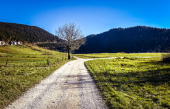 Country road and fields with crossroad and a tree. Royalty Free Stock Photo