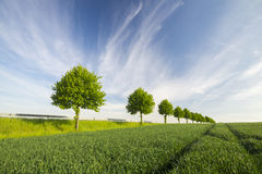Country Road by fields Stock Photography