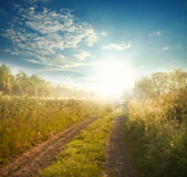 Country road among fields at sunrise on background sky. Country road among fields and trees at sunrise on the background of blue sky Stock Image