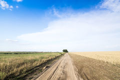 Country road among fields of wheat. Stock Photos