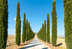 Country road flanked with cypresses ascending a hi Royalty Free Stock Photos