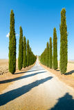 Country road flanked with cypresses ascending a hill Stock Images